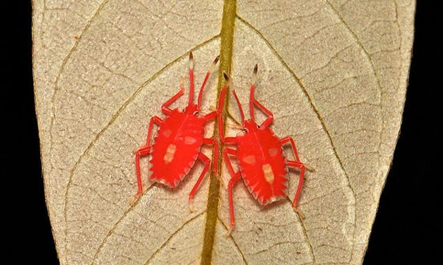 latest esxi bugs